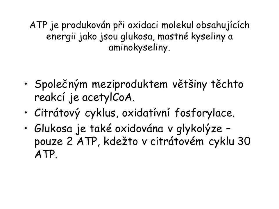 ATP je produkován při oxidaci molekul obsahujících energii jako jsou glukosa, mastné kyseliny a aminokyseliny. Společným meziproduktem většiny těchto