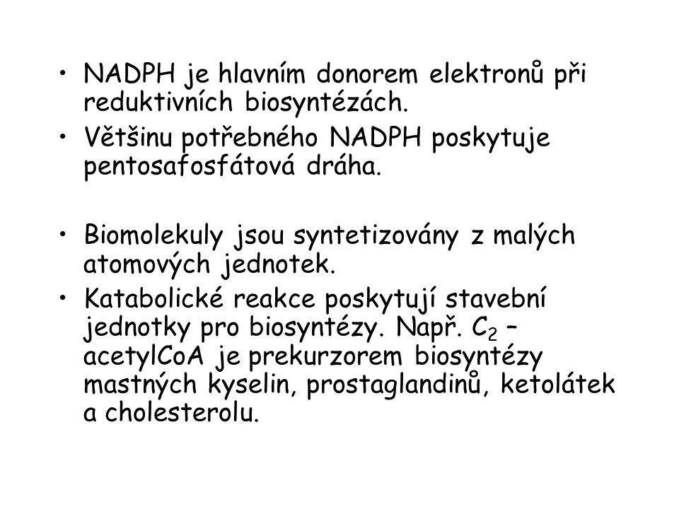 NADPH je hlavním donorem elektronů při reduktivních biosyntézách. Většinu potřebného NADPH poskytuje pentosafosfátová dráha. Biomolekuly jsou syntetiz