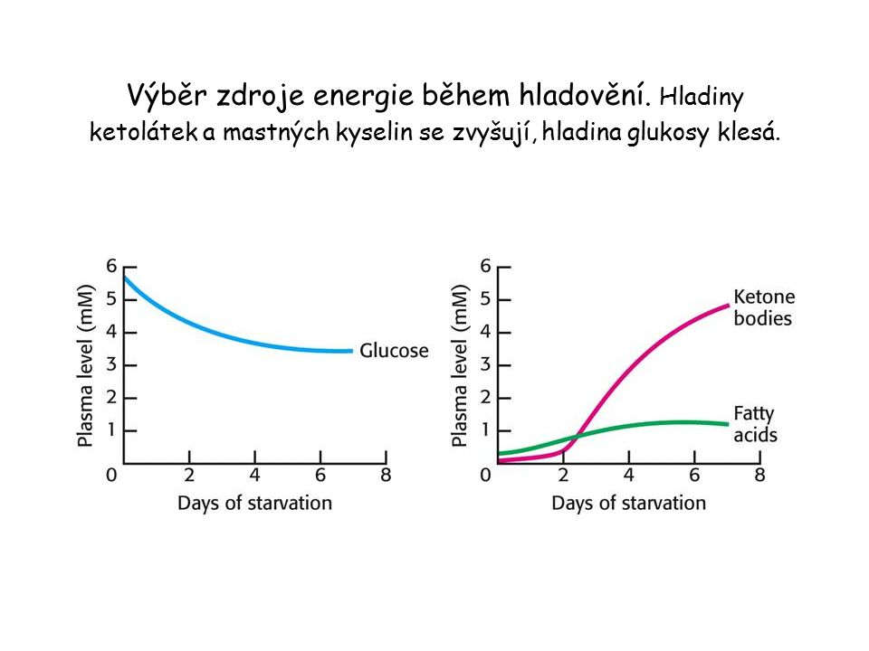 Výběr zdroje energie během hladovění. Hladiny ketolátek a mastných kyselin se zvyšují, hladina glukosy klesá.