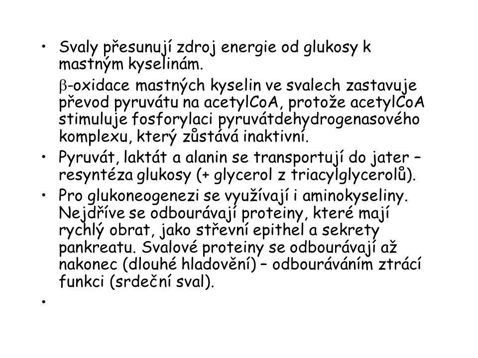 Svaly přesunují zdroj energie od glukosy k mastným kyselinám.  -oxidace mastných kyselin ve svalech zastavuje převod pyruvátu na acetylCoA, protože a