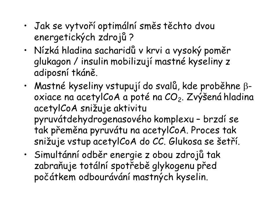 Jak se vytvoří optimální směs těchto dvou energetických zdrojů ? Nízká hladina sacharidů v krvi a vysoký poměr glukagon / insulin mobilizují mastné ky
