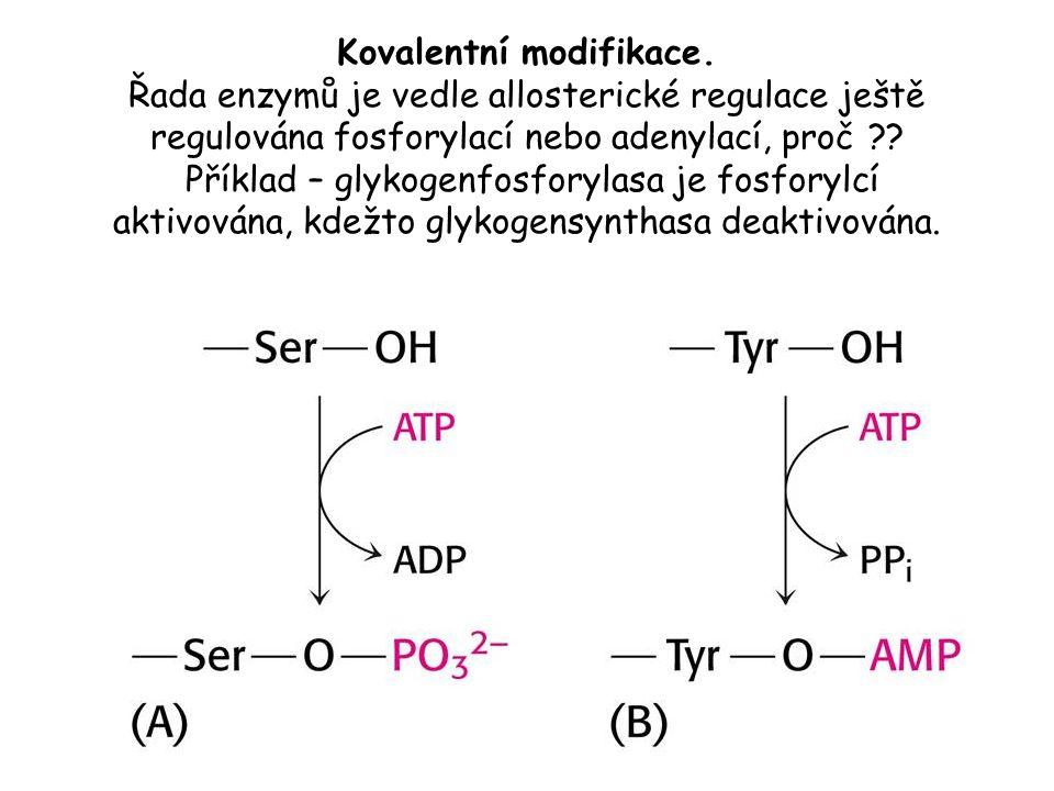 Kovalentní modifikace. Řada enzymů je vedle allosterické regulace ještě regulována fosforylací nebo adenylací, proč ?? Příklad – glykogenfosforylasa j