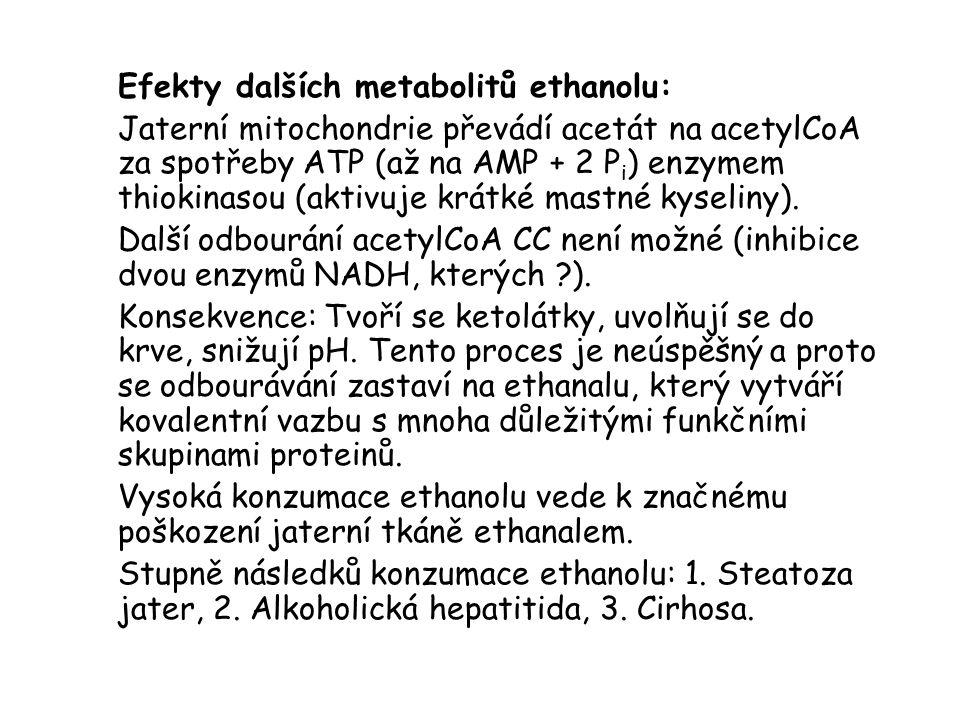 Efekty dalších metabolitů ethanolu: Jaterní mitochondrie převádí acetát na acetylCoA za spotřeby ATP (až na AMP + 2 P i ) enzymem thiokinasou (aktivuj