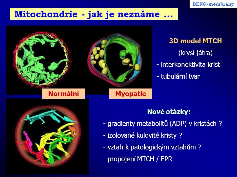 Mitochondrie - jak je neznáme... BENG-membrány Nové otázky: - gradienty metabolitů (ADP) v kristách ? - izolované kulovité kristy ? - vztah k patologi