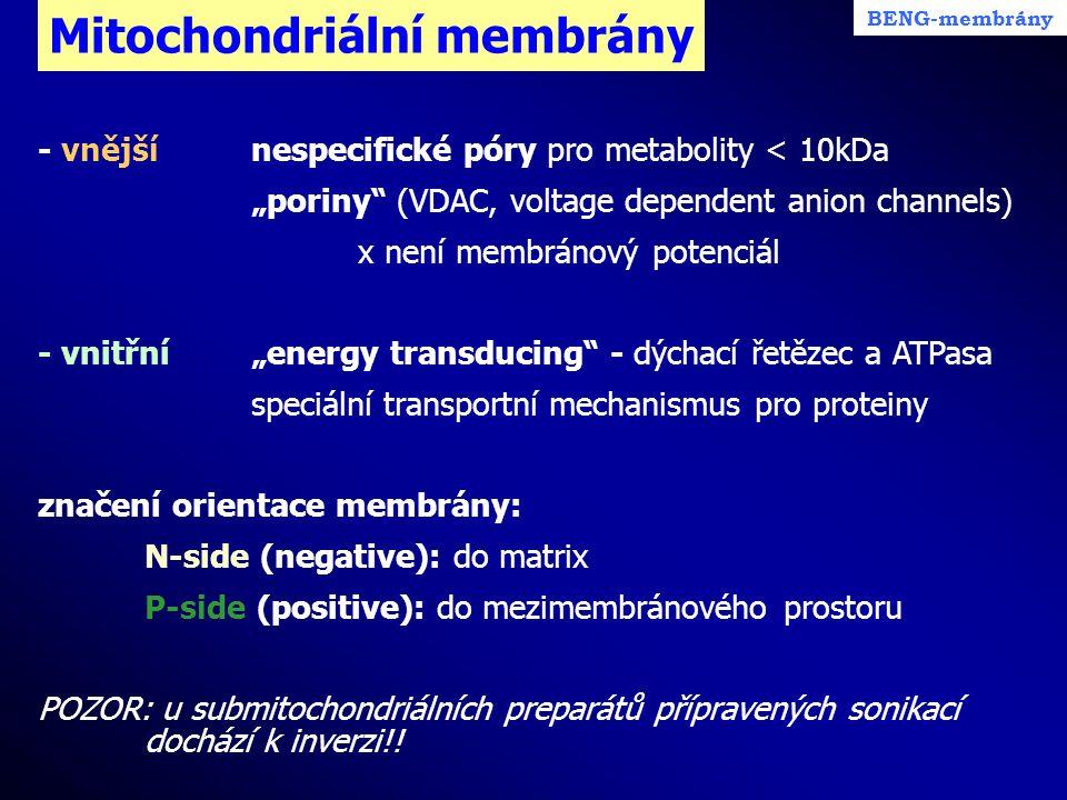 """Mitochondriální membrány BENG-membrány - vnějšínespecifické póry pro metabolity < 10kDa """"poriny"""" (VDAC, voltage dependent anion channels) x není membr"""