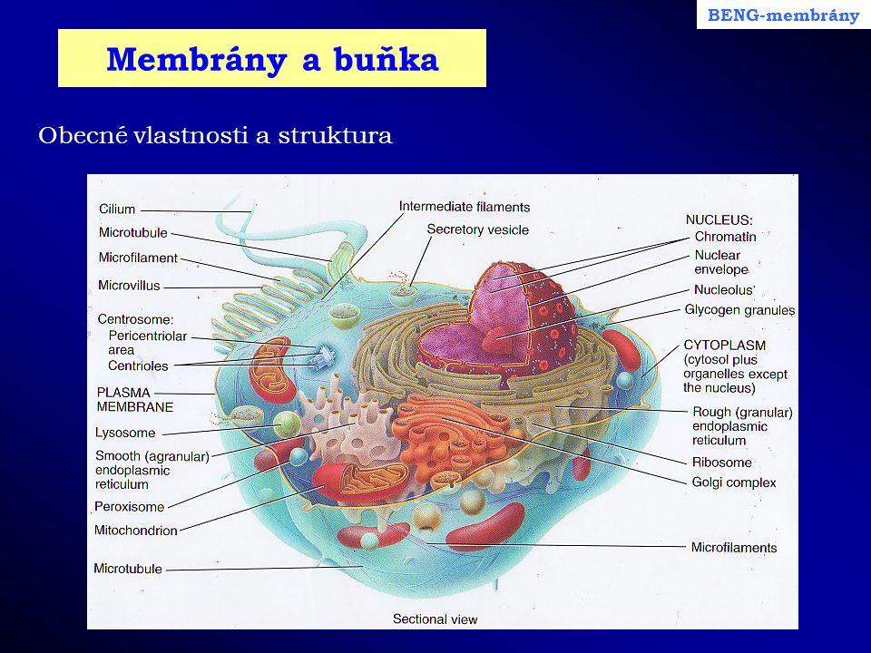 Membrány a buňka BENG-membrány Obecné vlastnosti a struktura