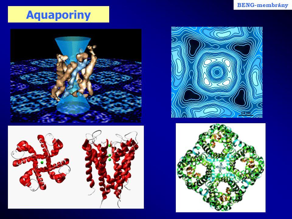 Aquaporiny BENG-membrány