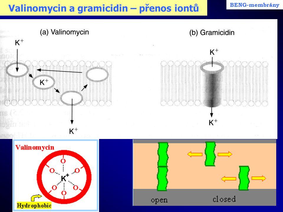 Valinomycin a gramicidin – přenos iontů BENG-membrány