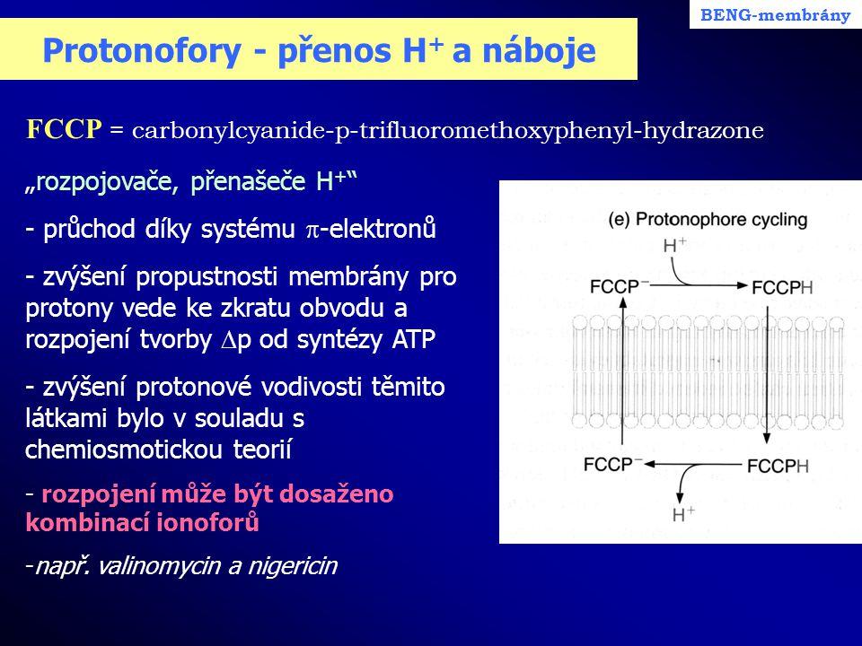 """Protonofory - přenos H + a náboje FCCP = carbonylcyanide-p-trifluoromethoxyphenyl-hydrazone BENG-membrány """"rozpojovače, přenašeče H + """" - průchod díky"""
