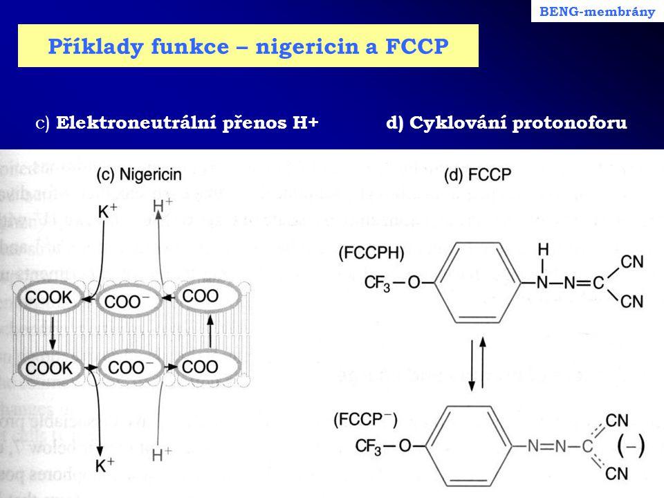Příklady funkce – nigericin a FCCP c) Elektroneutrální přenos H+ d) Cyklování protonoforu BENG-membrány