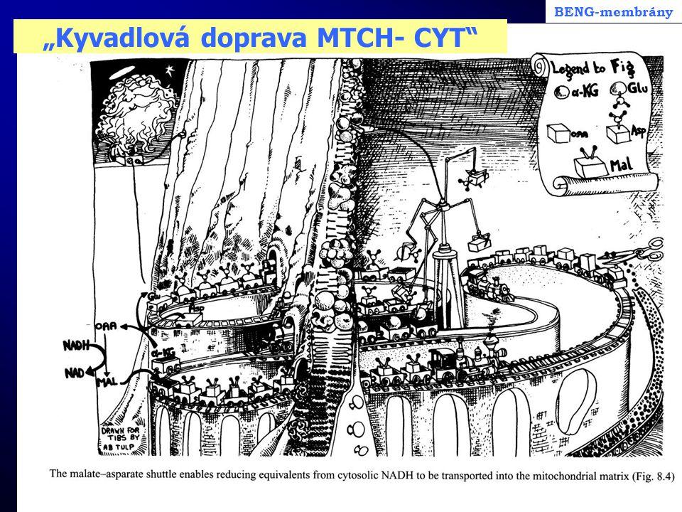 """""""Kyvadlová doprava MTCH- CYT"""""""
