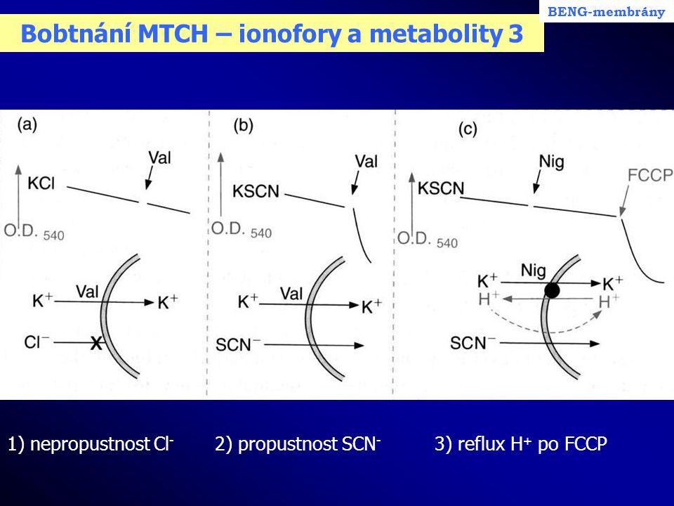 Bobtnání MTCH – ionofory a metabolity 3 1) nepropustnost Cl - 2) propustnost SCN - 3) reflux H + po FCCP BENG-membrány