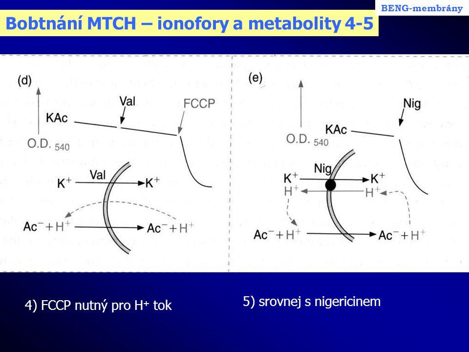 Bobtnání MTCH – ionofory a metabolity 4-5 4) FCCP nutný pro H + tok BENG-membrány 5) srovnej s nigericinem