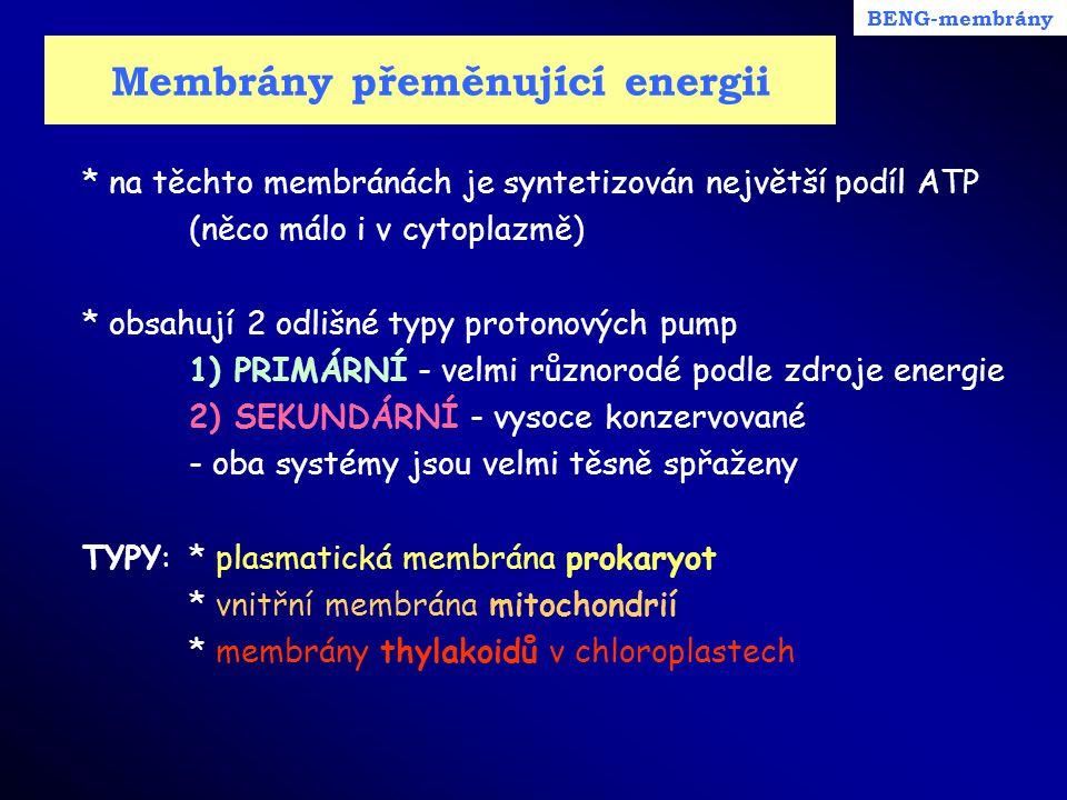 Membrány přeměnující energii * na těchto membránách je syntetizován největší podíl ATP (něco málo i v cytoplazmě) * obsahují 2 odlišné typy protonovýc