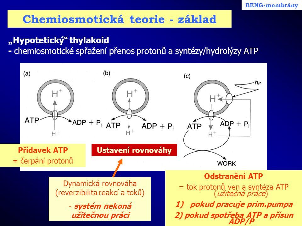 """Chemiosmotická teorie - základ """" Hypotetický"""" thylakoid - chemiosmotické spřažení přenos protonů a syntézy/hydrolýzy ATP BENG-membrány Přídavek ATP ="""