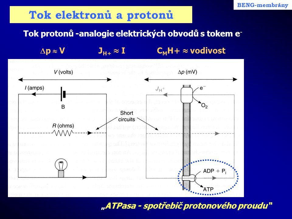 """Tok elektronů a protonů Tok protonů -analogie elektrických obvodů s tokem e -  p  VJ H+  IC M H+  vodivost BENG-membrány """"ATPasa - spotřebič proto"""