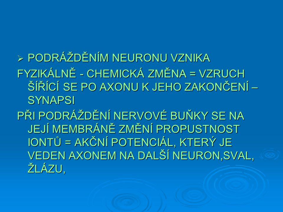  PODRÁŽDĚNÍM NEURONU VZNIKA FYZIKÁLNĚ - CHEMICKÁ ZMĚNA = VZRUCH ŠÍŘÍCÍ SE PO AXONU K JEHO ZAKONČENÍ – SYNAPSI PŘI PODRÁŽDĚNÍ NERVOVÉ BUŇKY SE NA JEJÍ