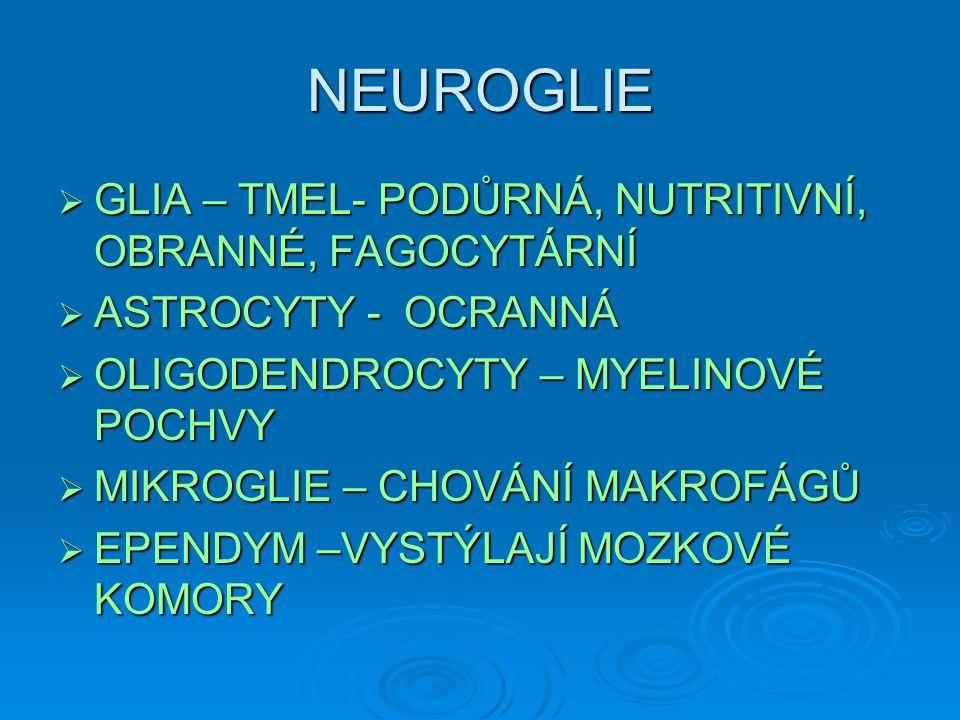NEUROGLIE  GLIA – TMEL- PODŮRNÁ, NUTRITIVNÍ, OBRANNÉ, FAGOCYTÁRNÍ  ASTROCYTY - OCRANNÁ  OLIGODENDROCYTY – MYELINOVÉ POCHVY  MIKROGLIE – CHOVÁNÍ MA