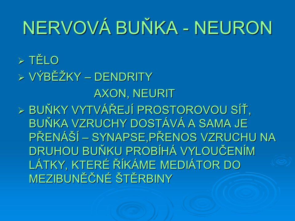 NERVOVÁ BUŇKA - NEURON  TĚLO  VÝBĚŽKY – DENDRITY AXON, NEURIT AXON, NEURIT  BUŇKY VYTVÁŘEJÍ PROSTOROVOU SÍŤ, BUŇKA VZRUCHY DOSTÁVÁ A SAMA JE PŘENÁŠ