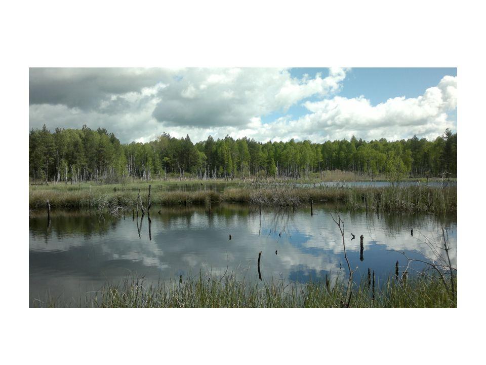 Závěry Obě stanoviště jsou cenná v české přírodě Na obou lokalitách se vyskytují druhy přímo přizpůsobené tamním podmínkám Obě chudá na živiny - důležitější je specializace více než schopnost konkurence – Rašeliniště – S-stratégové (rašeliník, rosnatka, blatka) – Písečný přesyp – S-stratégové (borovice lesní), R-stratégové (kostřava)