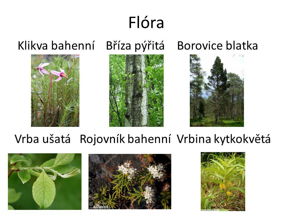 Závěry Rašeliniště – Voda + kyselá půda (malá konkurence) -> rašeliník -> rašelina -> více vody -> specifické prostředí -> specializace druhů