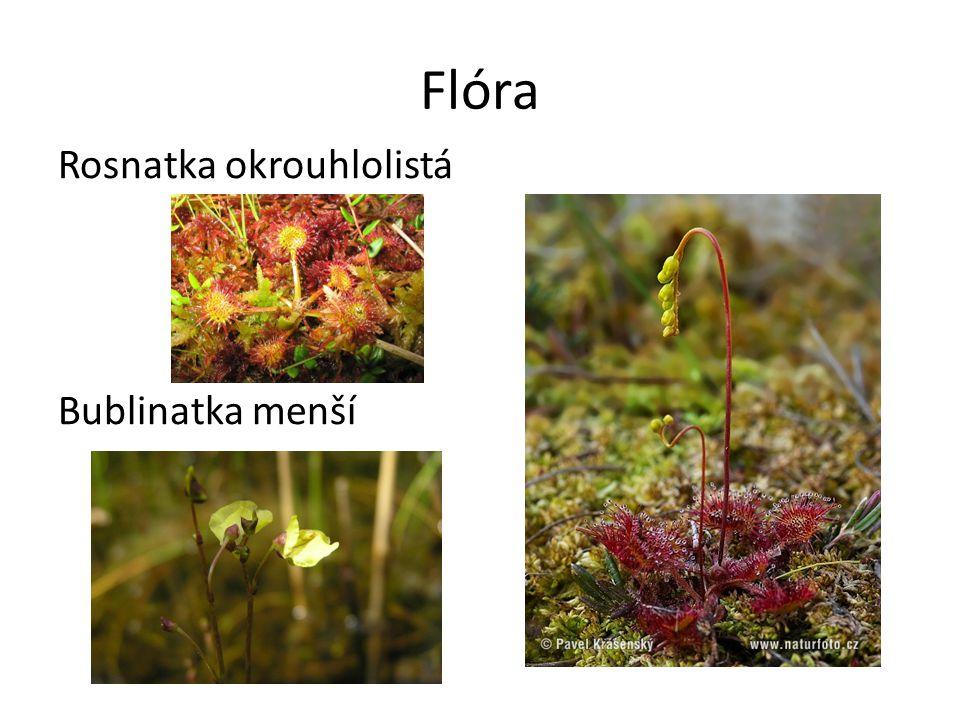 Fauna Leucorrhinia rubicunda Boloria aquilonaris Neptis rivularis Hyla arborea Natrix natrix