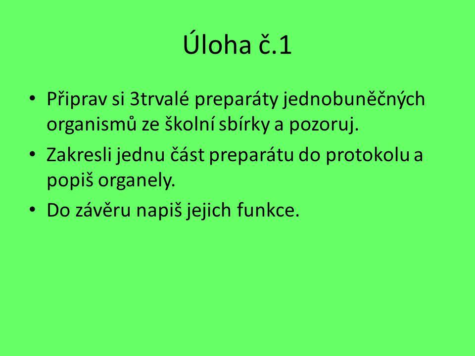 Úloha č.1 Připrav si 3trvalé preparáty jednobuněčných organismů ze školní sbírky a pozoruj. Zakresli jednu část preparátu do protokolu a popiš organel
