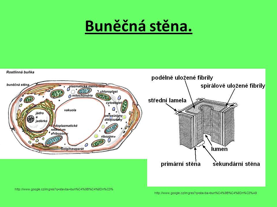 Cytoplazmatická membrána. http://www.google.cz/imgres?q=stavba+cytoplazmatick%C3%A9+membr%C3%