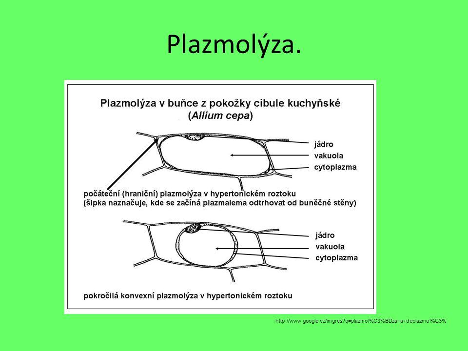 Plazmolýza. http://www.google.cz/imgres?q=plazmol%C3%BDza+a+deplazmol%C3%