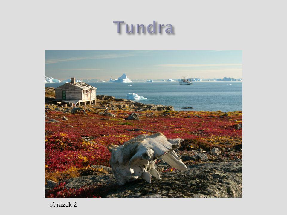  oblast  Aljaška, sever Kanady, Grónsko, severní Skandinávie, severní Sibiř  podnebí  tři čtvrtě roku zmrzlá zem, krátké léto (asi 50 dní)  rostliny  žádné stromy, jen keře – vrby, břízy (max.