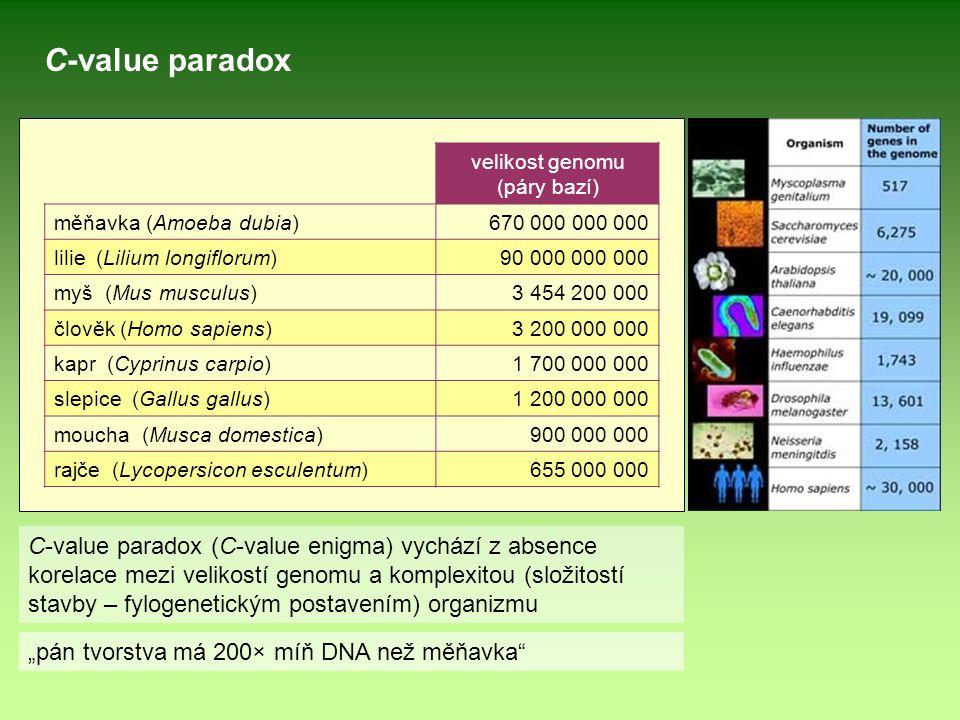 velikost genomu (páry bazí) měňavka (Amoeba dubia)670 000 000 000 lilie (Lilium longiflorum)90 000 000 000 myš (Mus musculus)3 454 200 000 člověk (Hom