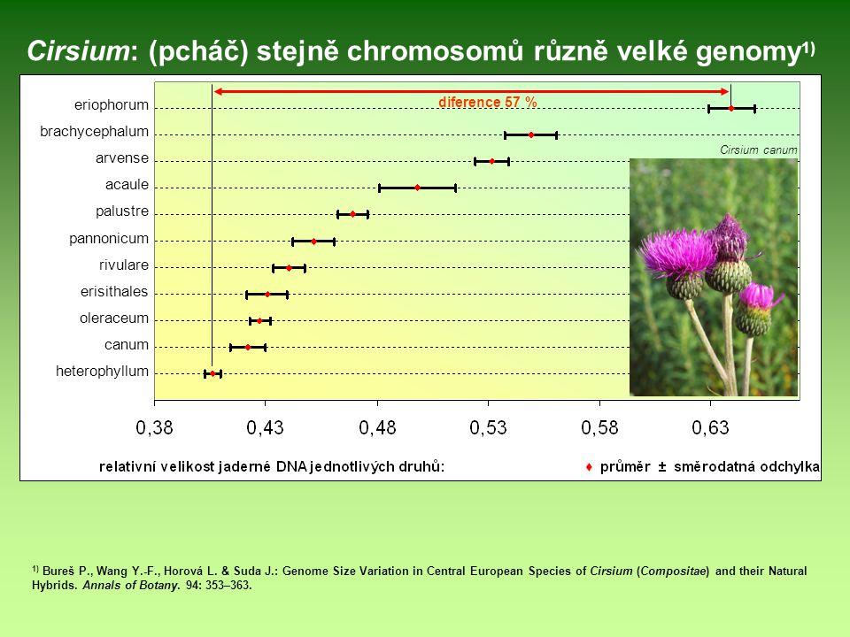 eriophorum brachycephalum arvense acaule palustre pannonicum rivulare erisithales oleraceum canum heterophyllum Cirsium: (pcháč) stejně chromosomů růz