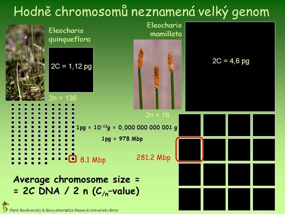 Eleocharis quinqueflora Eleocharis mamillata 2C = 1,12 pg 2C = 4,6 pg 2n = 136 2n = 16 Plant Biodiversity & Biosystematics Masaryk University Brno Ave