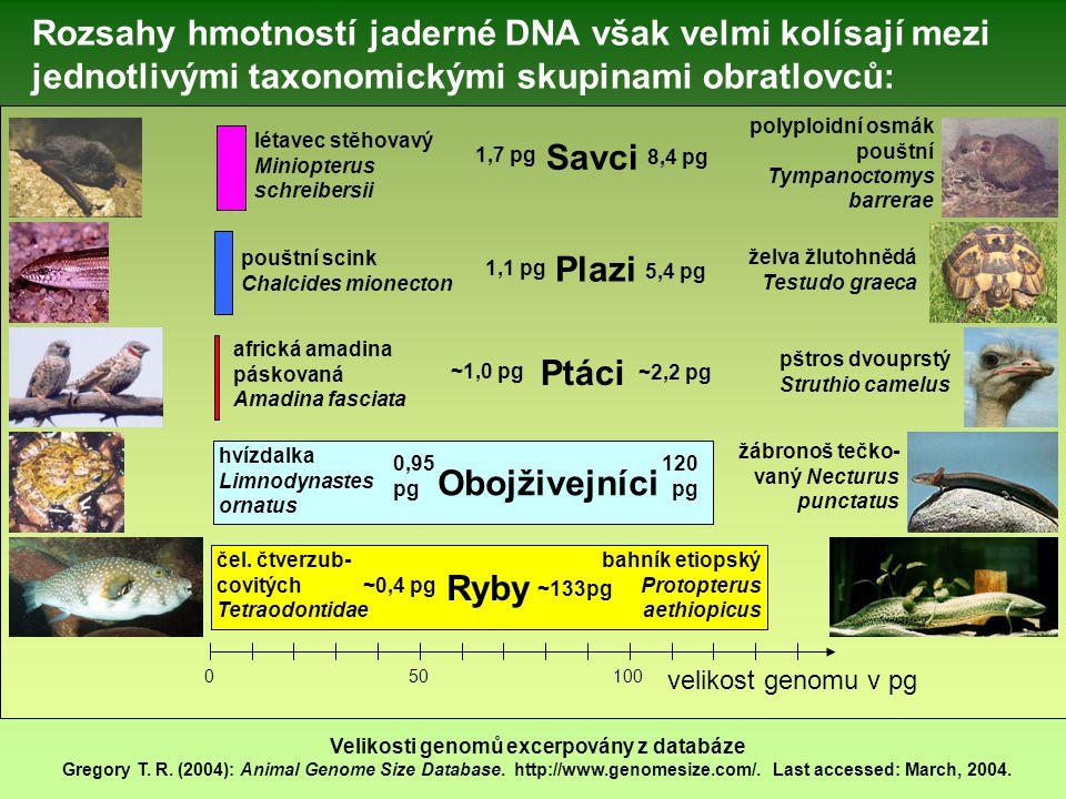 velikost genomu v pg 0 50 100 čel. čtverzub- covitých Tetraodontidae Ryby bahník etiopský Protopterus aethiopicus Obojživejníci 0,95 pg hvízdalka Limn