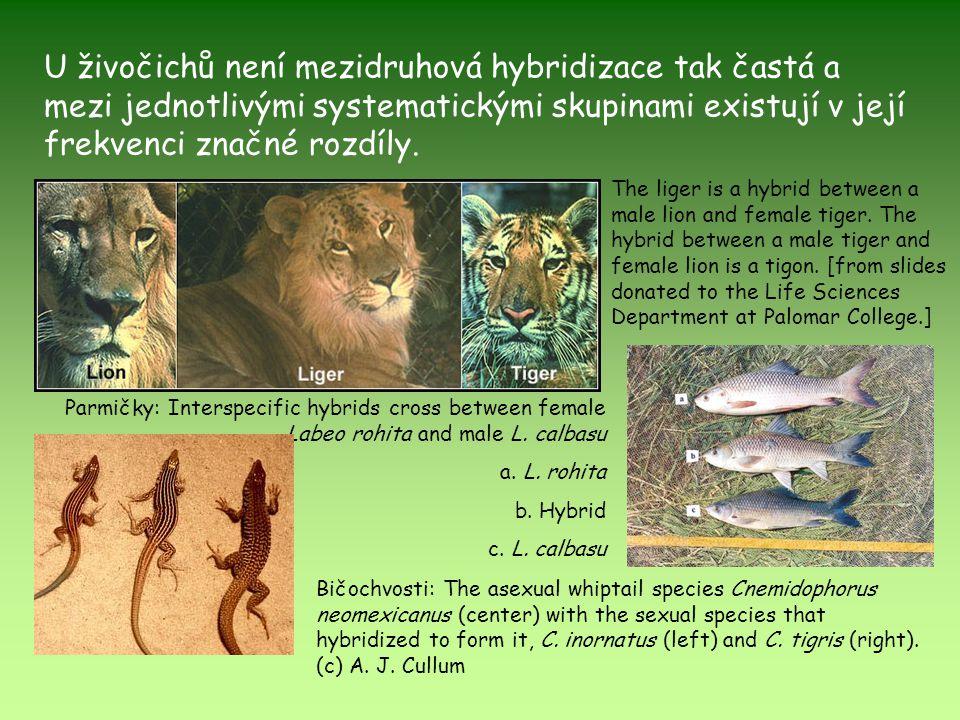 U živočichů není mezidruhová hybridizace tak častá a mezi jednotlivými systematickými skupinami existují v její frekvenci značné rozdíly. Parmičky: In