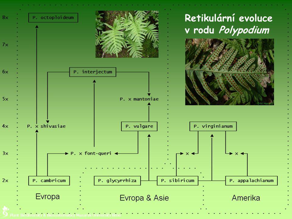 Retikulární evoluce v rodu Polypodium Plant Biodiversity & Biosystematics Masaryk University Brno