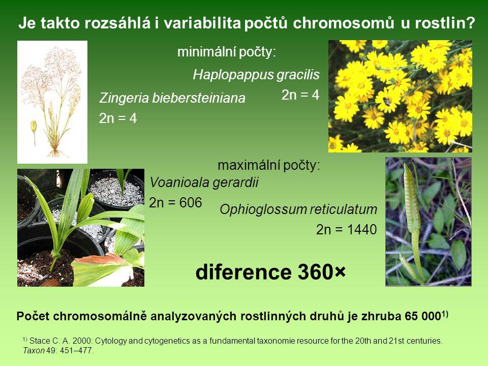 Zingeria biebersteiniana 2n = 4 Haplopappus gracilis 2n = 4 Ophioglossum reticulatum 2n = 1440 Voanioala gerardii 2n = 606 Počet chromosomálně analyzo