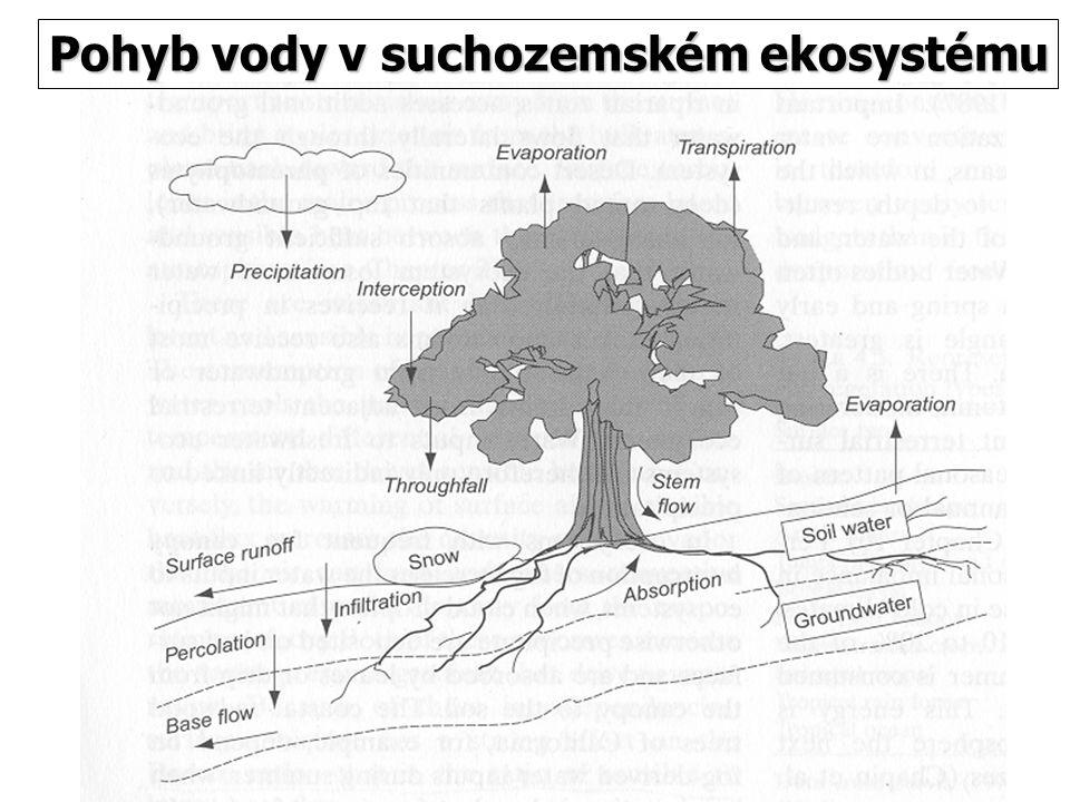 Pohyb vody v suchozemském ekosystému