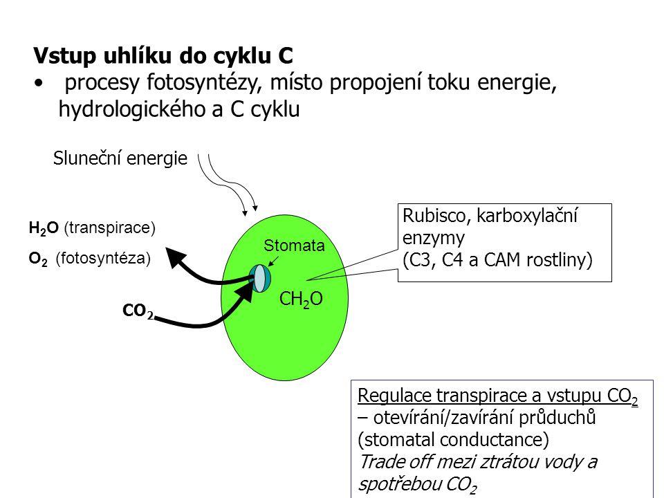 Vstup uhlíku do cyklu C procesy fotosyntézy, místo propojení toku energie, hydrologického a C cyklu Sluneční energie CO 2 CH 2 O Stomata H 2 O (transp