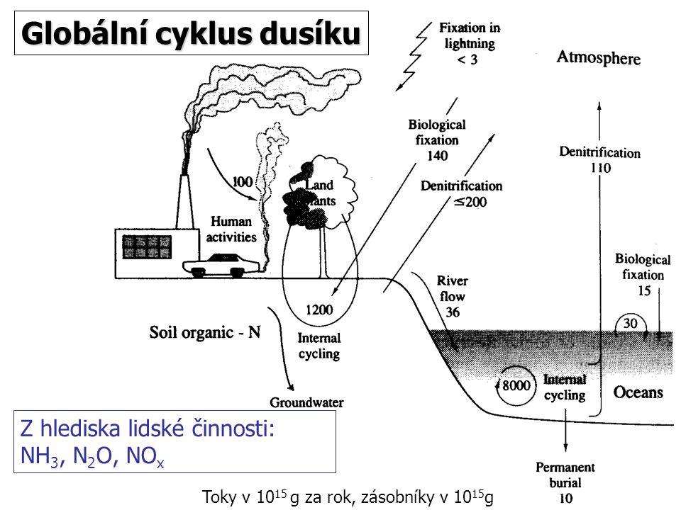 Globální cyklus dusíku Z hlediska lidské činnosti: NH 3, N 2 O, NO x Toky v 10 15 g za rok, zásobníky v 10 15 g