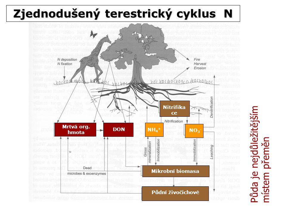 Mrtvá org. hmota DON NH 4 + NO 3 - Nitrifika ce Mikrobní biomasa Půdní živočichové Zjednodušený terestrický cyklus N Půda je nejdůležitějším místem př