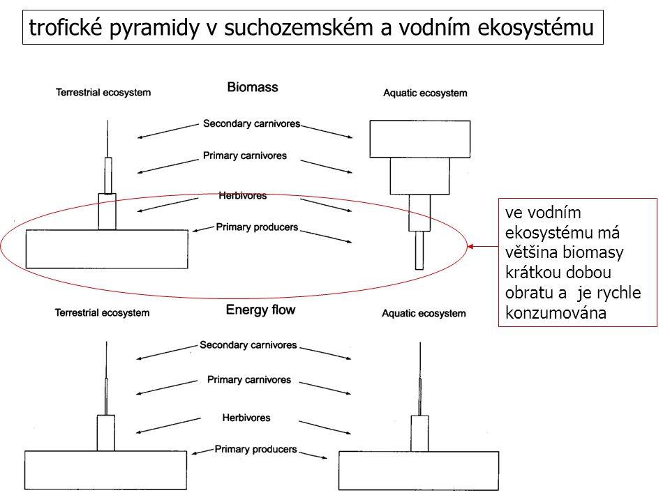 trofické pyramidy v suchozemském a vodním ekosystému ve vodním ekosystému má většina biomasy krátkou dobou obratu a je rychle konzumována