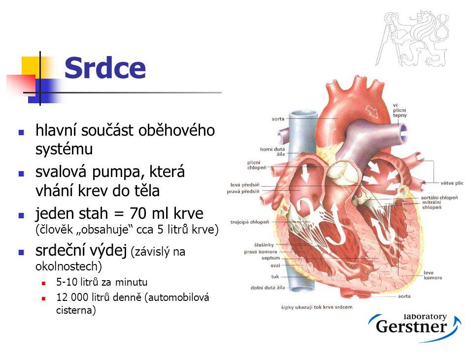 """Srdce hlavní součást oběhového systému svalová pumpa, která vhání krev do těla jeden stah = 70 ml krve (člověk """"obsahuje"""" cca 5 litrů krve) srdeční vý"""