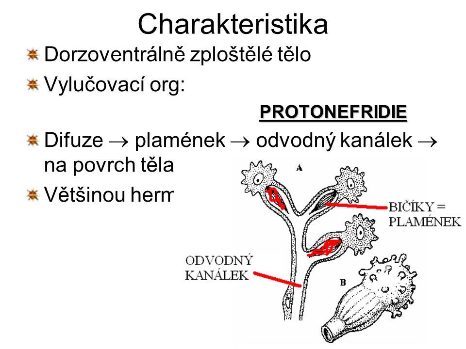 háďátko řepné parazit v kořenovém systému řepy háďátko pšeničné v klasech pšenice roup dětský v tenkém střevě člověka (dětí) příznaky: podrážděnost, vyčerpání, svědění oplozené samičky  kladení vajíček kolem řitního otvoru  škrábání  ústa(autoinfekce)  tenké střevo přenos vajíček – ložním prádlem, větrem, mouchami
