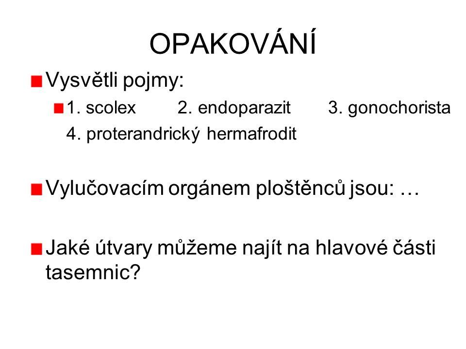 OPAKOVÁNÍ Vysvětli pojmy: 1. scolex 2. endoparazit 3. gonochorista 4. proterandrický hermafrodit Vylučovacím orgánem ploštěnců jsou: … Jaké útvary můž