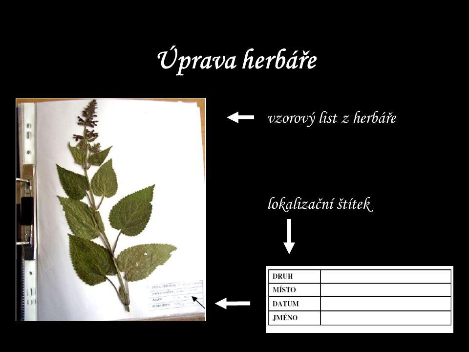 Úprava herbáře vzorový list z herbáře lokalizační štítek