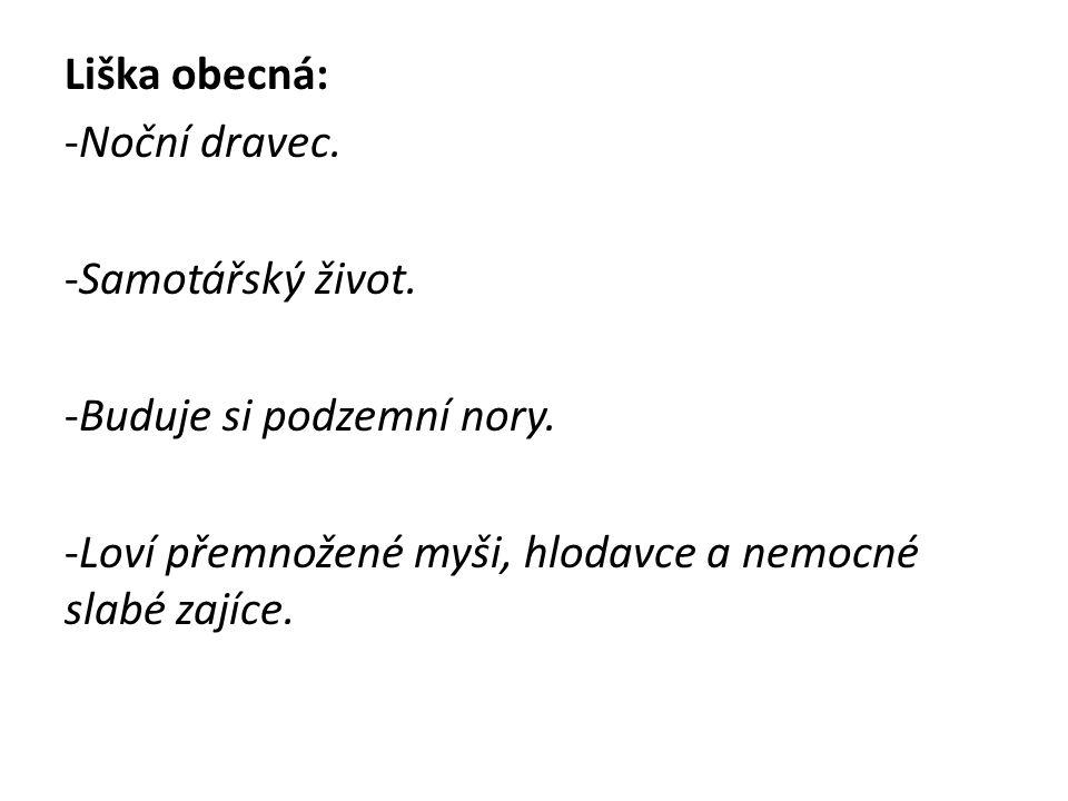 http://ms-snezne.wbs.cz/zver/liska5.jpg
