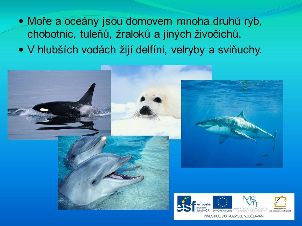 Moře a oceány jsou domovem mnoha druhů ryb, chobotnic, tuleňů, žraloků a jiných živočichů. V hlubších vodách žijí delfíni, velryby a sviňuchy.