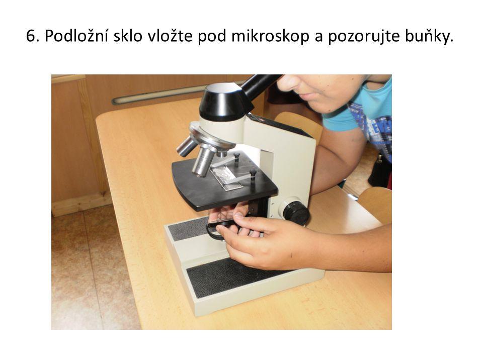 6. Podložní sklo vložte pod mikroskop a pozorujte buňky.