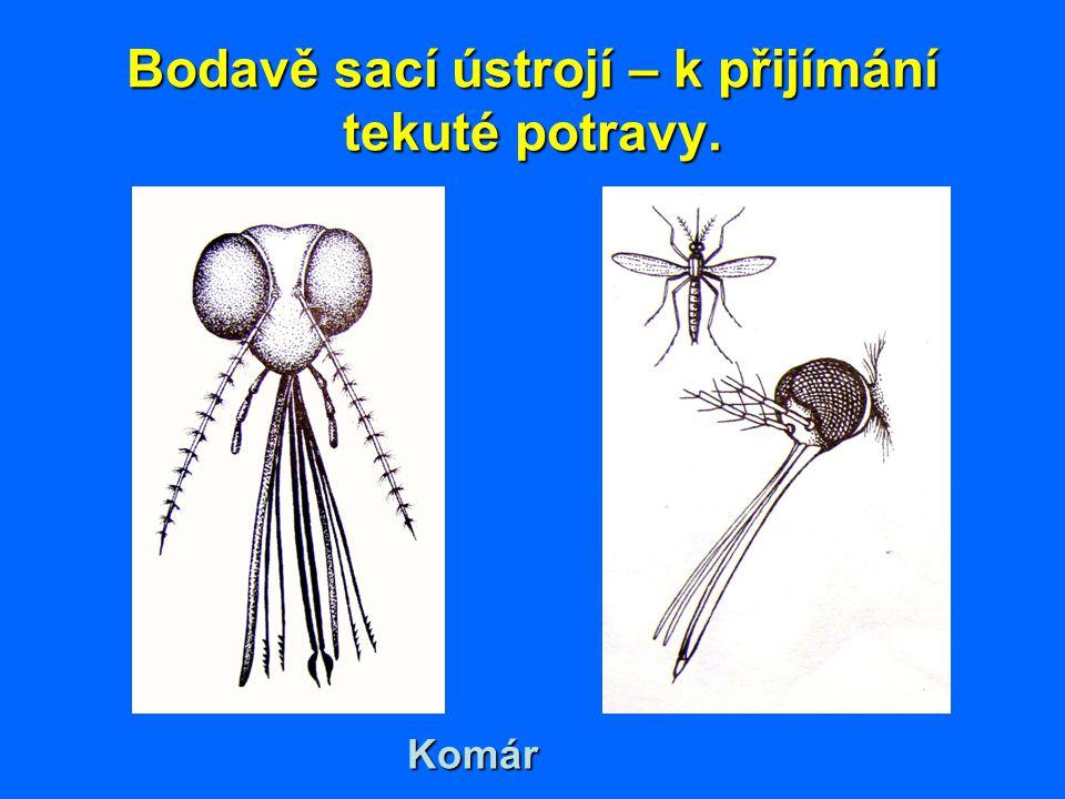 Bodavě sací ústrojí – k přijímání tekuté potravy. Komár